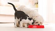 Hunder liker fett – katter vil ha karbohydrater