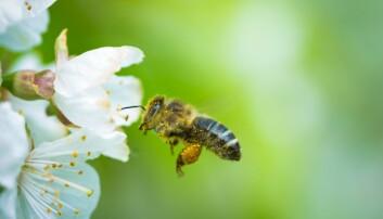 Bier er de første insektene som skjønner null