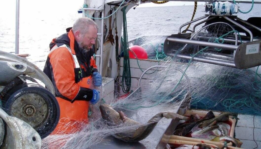 Kameratskap, samhold, selvstendighet og konkret utbytte av innsatsen, er grunner til svært høy trivselsfaktor blant fiskerne. (Foto: Halvard Aasjord, SINTEF Ocean)