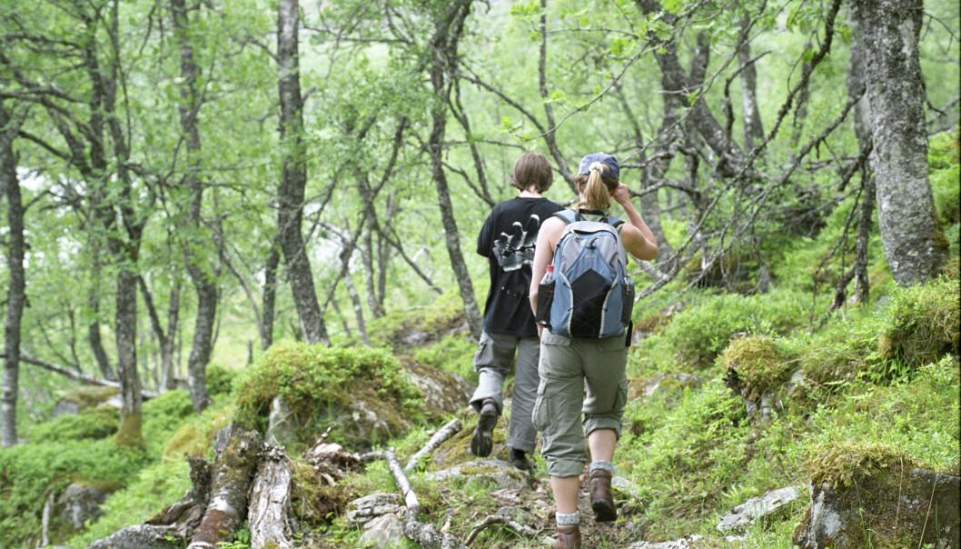 En ny studie konkluderer med at jordkvaliteten i europeiske skoger er på bedringens vei. (Foto: Lars Sandved Dalen)