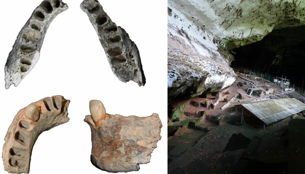 De eldste kjevene er øverst i bildet. Som du kan se, har ikke tennene overlevd årtusenene. Til høyre i bildet sees hulen de ble funnet i.  (Bilde: Darren Curnoe)