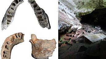 30 000 år gamle kjever forteller om ur-kosthold