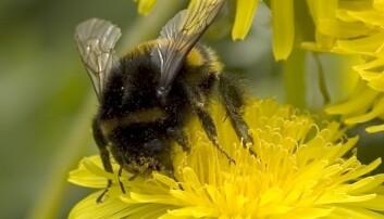 Bier og humler får hjerneskade av plantevernmidler