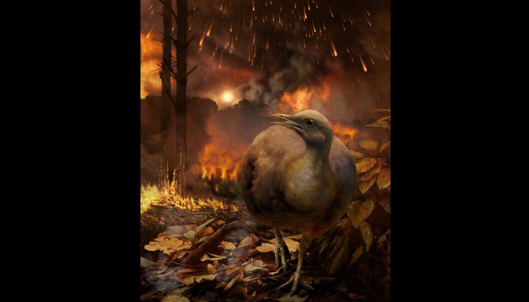 Slik kan det ha sett ut da en tenkt, landlevende fugl måtte flykte fra infernoet etter asteroidenedslaget.  (Bilde: Phillip M. Krzeminski)