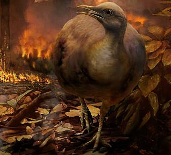 Dagens fugler stammer fra de få som overlevde meteoritten som drepte dinosaurene
