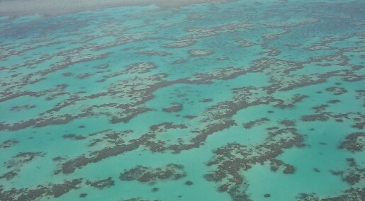 Verdens største korallrev vandrer fram og tilbake