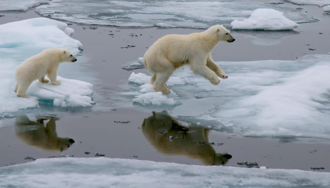 Ny studie: Klimaet er på farlig kurs for verdens dyr og planter