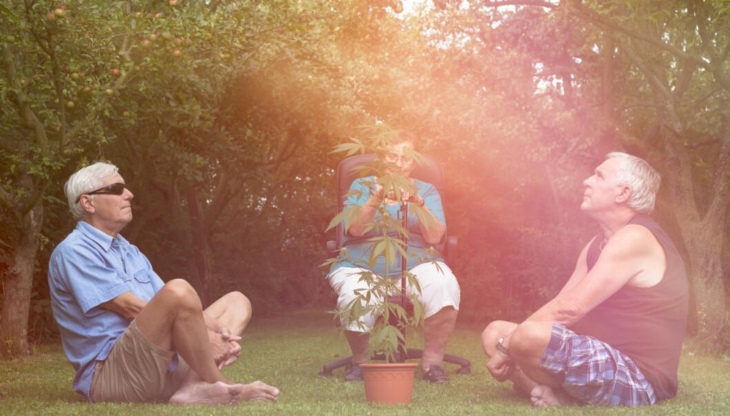 I et lite forsøk får voksne amerikanere det bedre med bruk av medisinsk cannabis.  (Foto: Jan Mika / Shutterstock / NTB scanpix)