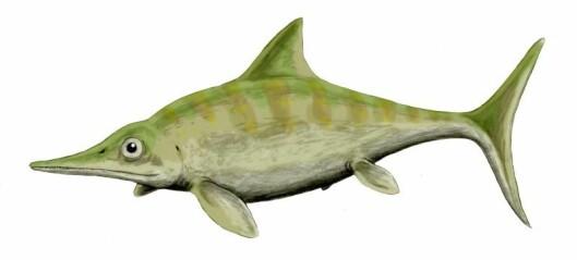 En viktig brite: Ophthalmosaurus