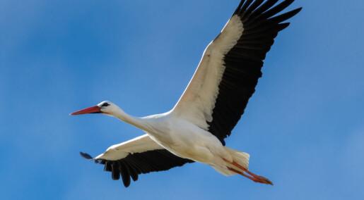 Fuglen forrest i flokken flyr best