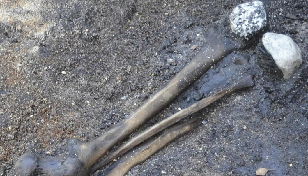 Dette er lårbein som ble kastet i en dansk innsjø for rundt 2000 år siden.  (Foto: PNAS)