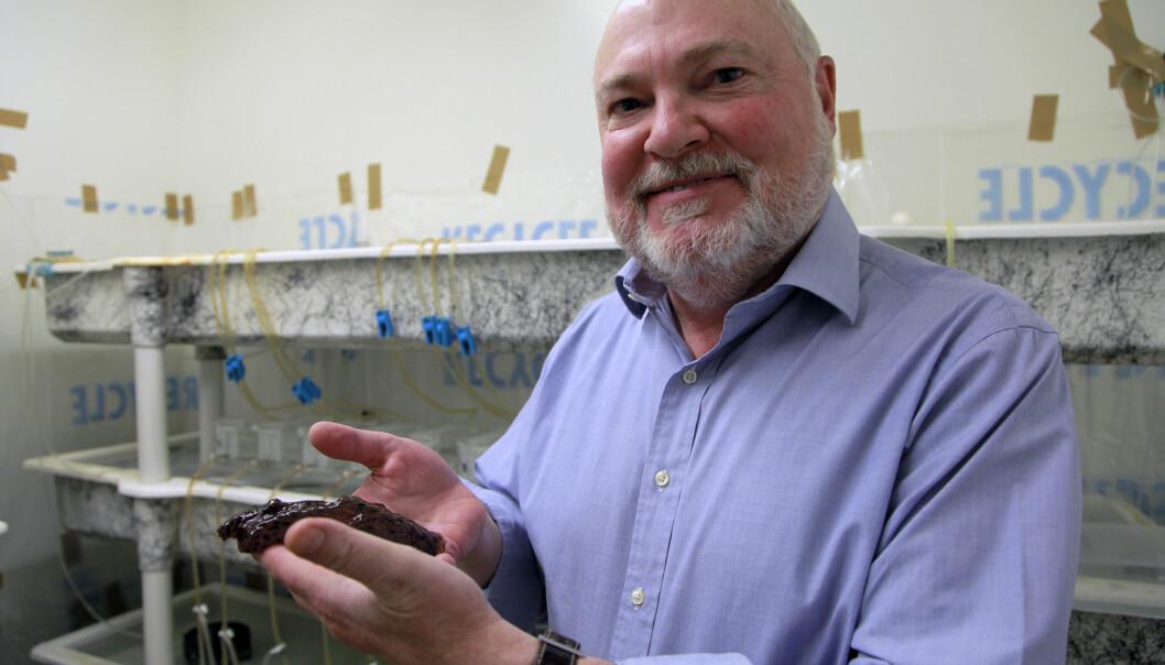 David Glanzman viser fram en sjøhare. Det var disse sjøsneglene forskerne brukte da de klarte å overføre minner fra ett dyr til et annet.  (Foto: Christelle Snow/UCLA)
