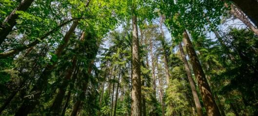 Er skogen det neste oljefondet?