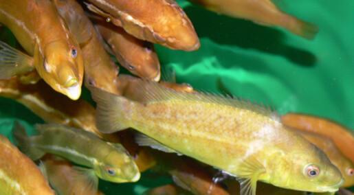 Møt fisken uten mage