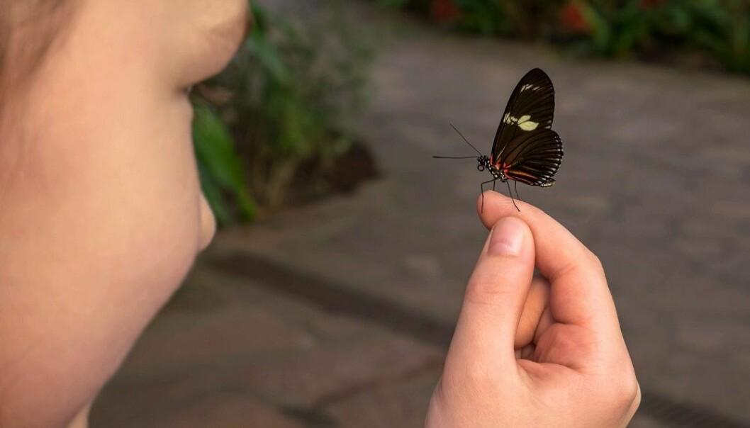 Uten insekter stopper verden