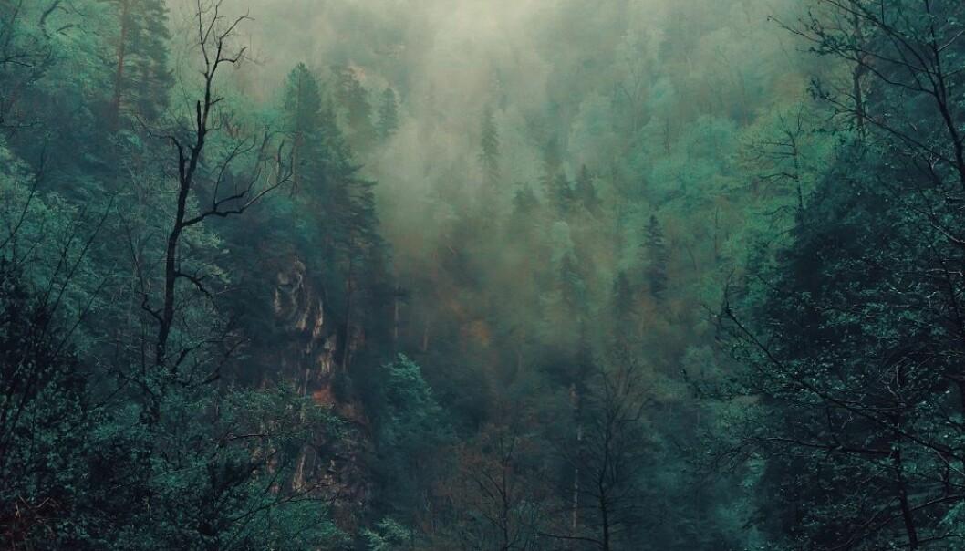Det var en gang en skog...