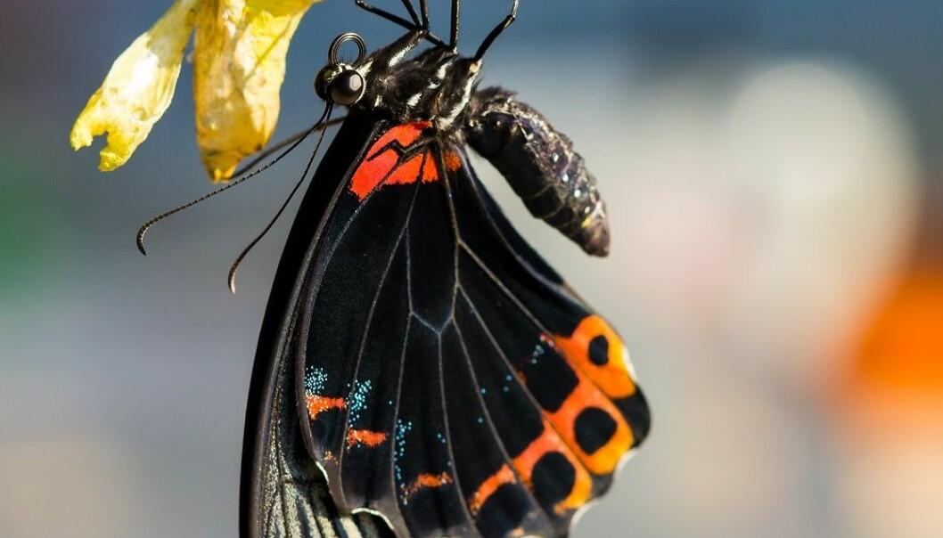Det sprøeste (og lureste) insektene gjør