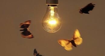 Som en møll mot lyset – men ikke i byen?