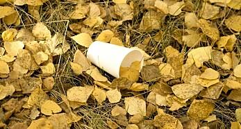 Billelarver spiser plast