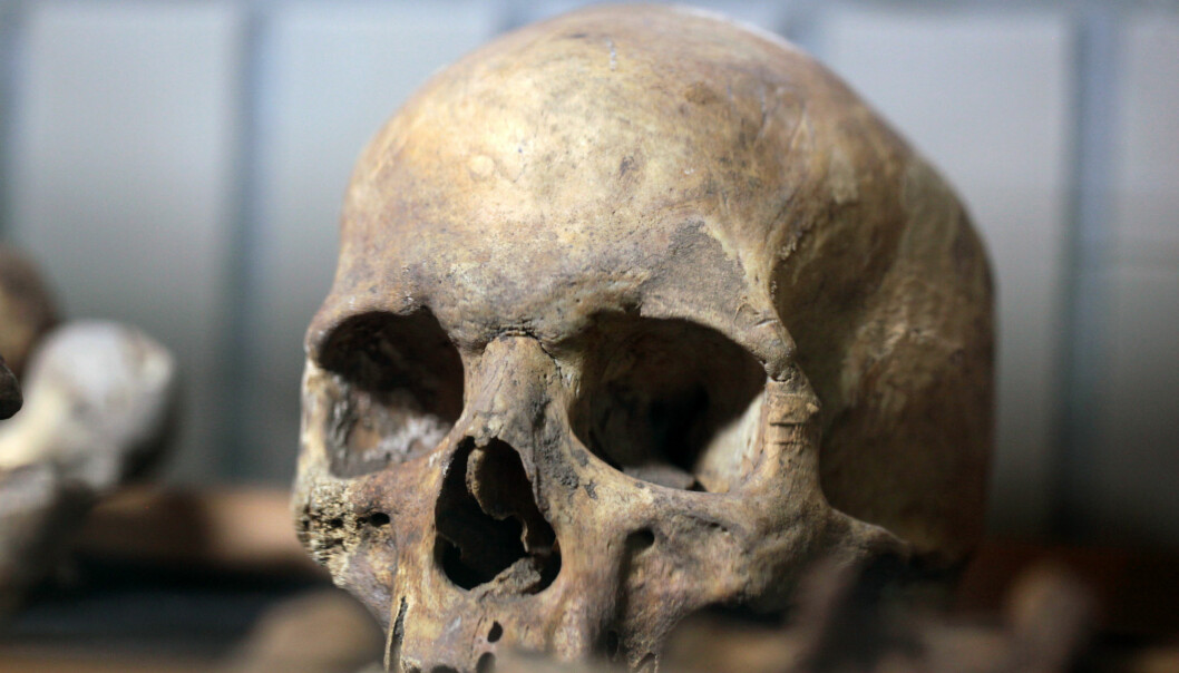 Hodeskaller som blir gravd opp har gjennom historien ofte havnet på museum, som på dette museet i Polen. (Foto: Shutterstock/NTB scanpix)