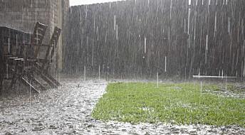 Seks ting du kan gjøre for å forberede hagen på styrtregn i sommer