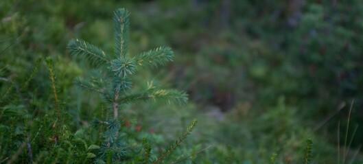 Trær til besvær