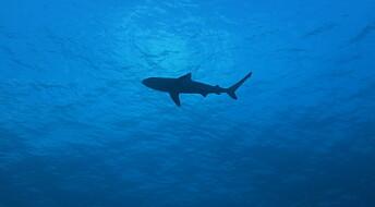 DNA-spor viste overraskende mangfold av hai