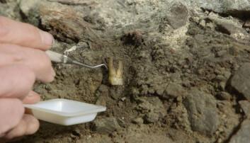 Arkeologer fant kister og tenner under domkirken i Stavanger