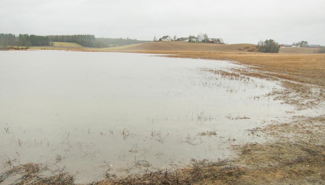 Oversvømte jorder gir store økonomiske tap for bonden. Men det er mulig å unngå mindre flommer med relativt enkle tiltak, mener forsker. (Foto: Anne Falk Ødegaard)