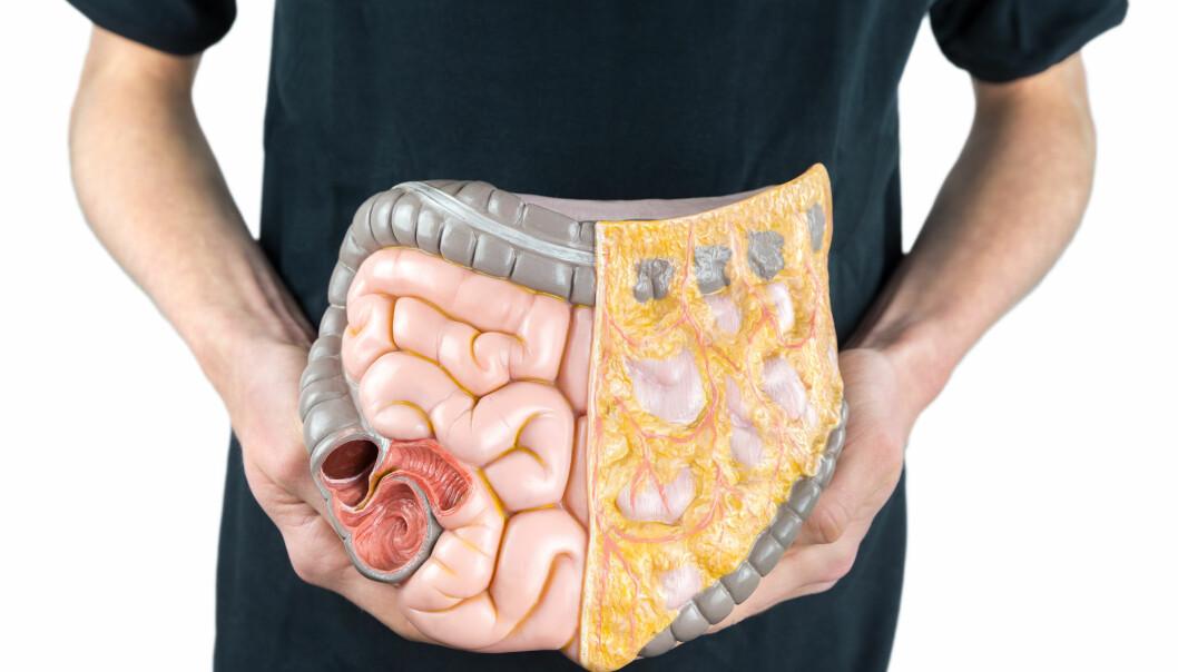 Bakterier i tarmen vår hjelper oss å fordøye maten vi spiser. Men vi vet fortsatt lite om hvordan de ulike bakteriene lever sammen. (Illustrasjonsfoto: Shutterstock / NTB Scanpix)