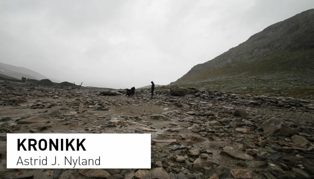 På Sulevatnet, på grensa mellom Sogn og Fjordane, Oppland og Buskerud, ligger det utvaskede steinalderboplasser.  (Foto: Astrid J. Nyland)
