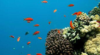 Surere hav skader alt fra fisk til plankton