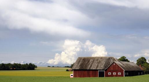 Fattigdom i svensk landbruk: Rammer hver fjerde enslige kvinne