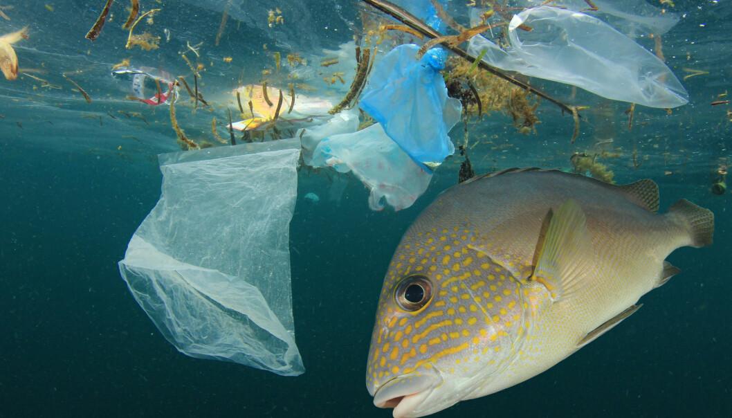 Hvilke konsekvenser kan mikroplast ha for land, vann og mattrygghet i Norge?   (Foto: Shutterstock / NTB Scanpix)