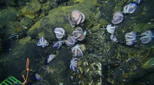 Blekkspruter ble oppdaget der ingen skulle tro at de kunne bo