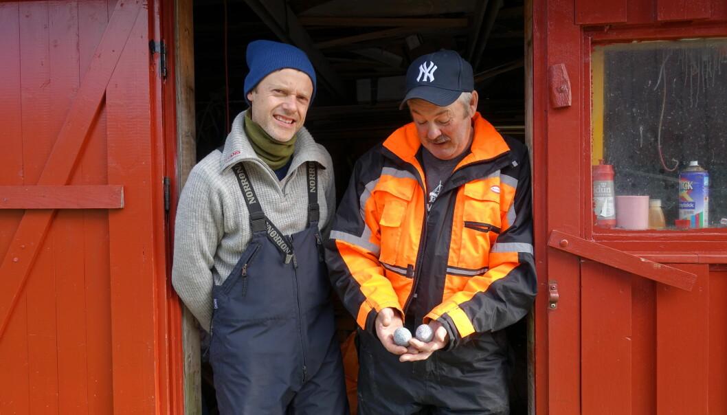 Forsker Thomas Holm Carlsen (til venstre) og røkter Eivind Hansen samarbeider om å øke ærfuglbestanden på Selvær. (Foto: Liv Jorunn Hind)