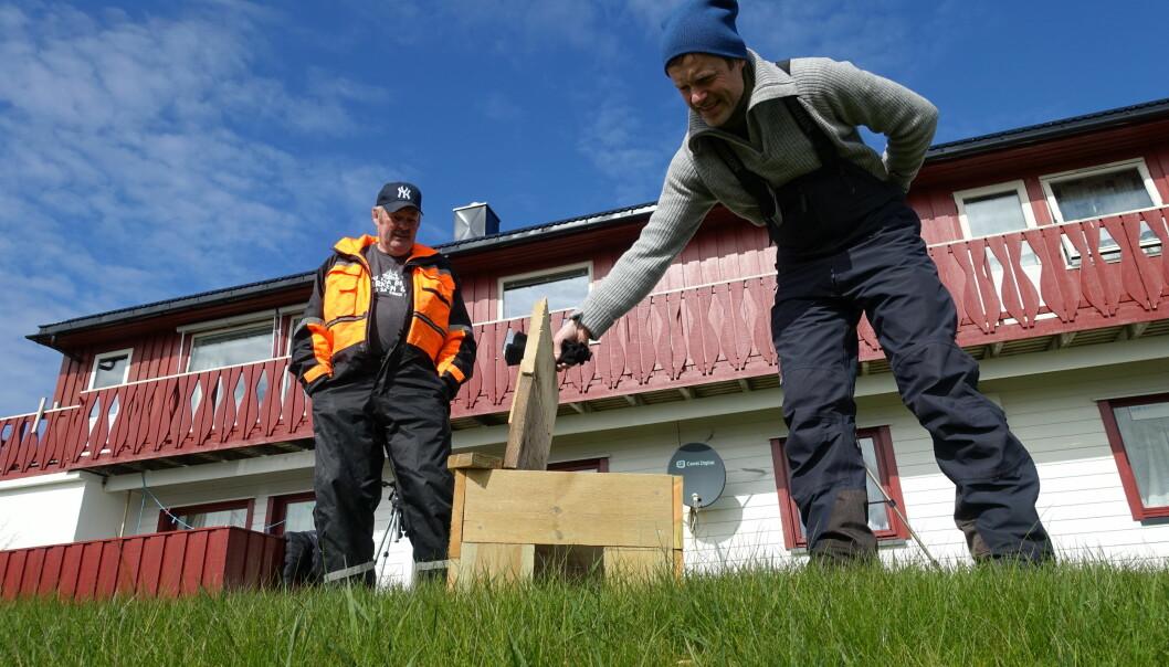 Eivind Hansen (til venstre) har bygd spesialdesignede fuglehus som gir ea beskyttelse mot eggrøverne. Thomas Holm Carlsen (til høyre) inspiserer taket som kan vippes opp. Det forenkler jobben med å klargjøre husene før neste hekkesesong. Samtidig er det langt enklere for forskerne å hente ut ea fra taket, enn å lure henne ut inngangen. (Foto: Liv Jorunn Hind)