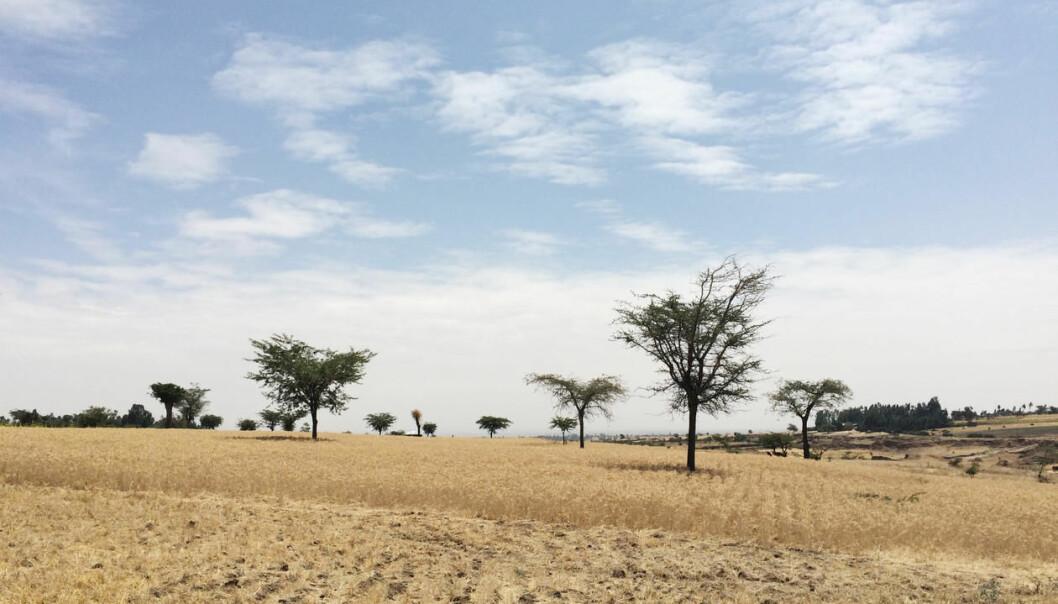I Etiopia bor rundt 80 prosent av befolkningen på landsbygden, et godt stykke fra sykehus. (Foto: Kristine Husøy Onarheim)