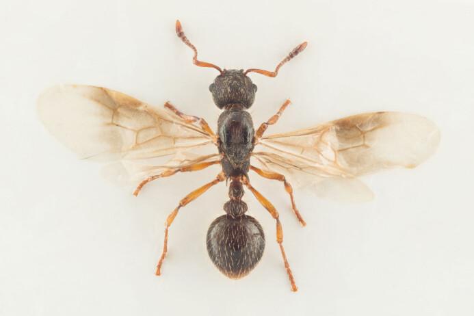 Maur stoppet nesten bok om seg selv