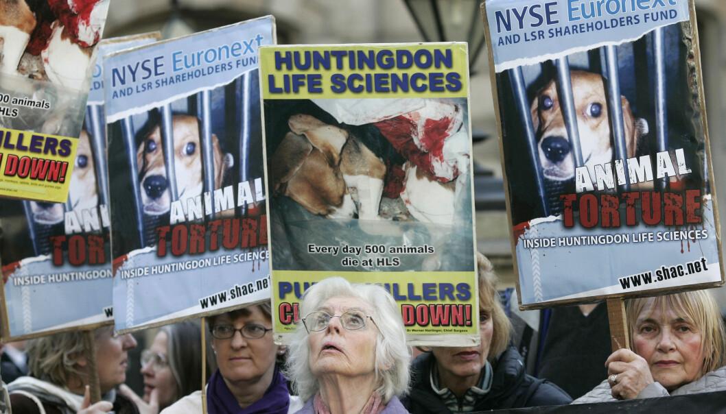 Stop Huntingdon Animal Cruelty (SHAC) er en protestkampanje som ble opprettet i 1999 i Storbritannia. Politiet klarte å stoppe dem, men på en måte som har gjort det vanskeligere for engasjerte folk å protestere i dag. (Foto: (AP / Sang Tan / NTB Scanpix)