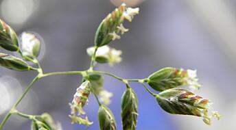 Pollenets hemmelige liv