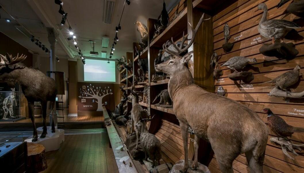 Samlingene fra ulike museer utgjør et gigantisk arkiv over livet på jorda. (Foto: Åge Hojem / NTNU Vitenskapsmuseet)