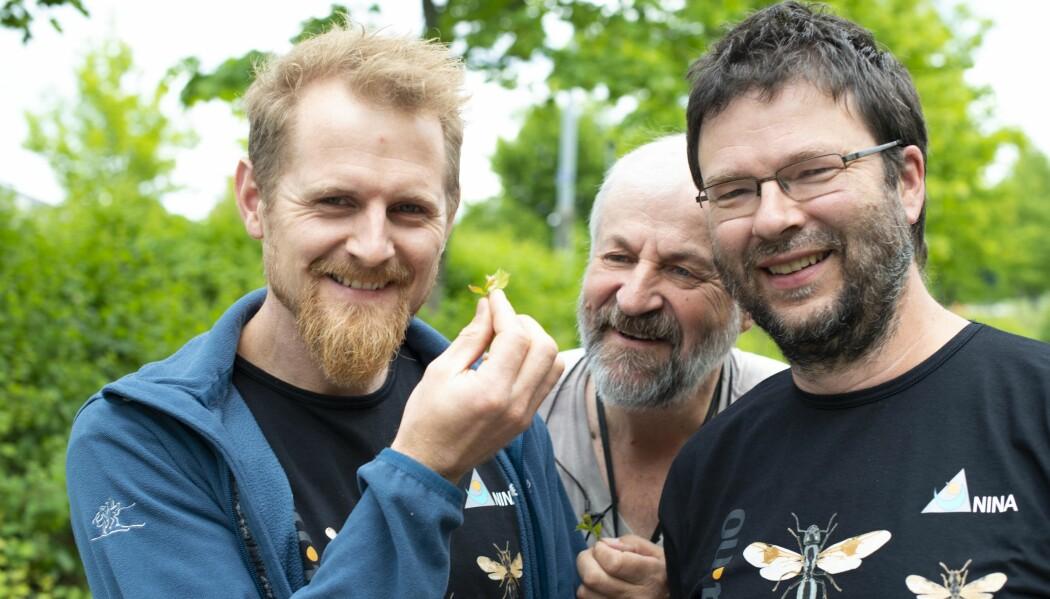 Insektforskerne Arnstein Staverløkk, Jan-Ove Gjershaug og Frode Ødegaard har samlet alle Norges 65 små og store maurarter i boka Maur i Norge. (Foto: Juliet Landrø)