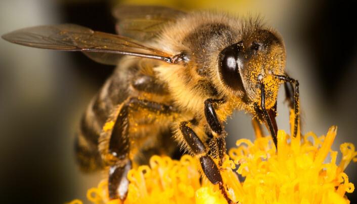 Bier minner mer om mennesker enn man kanskje nettopp tror.