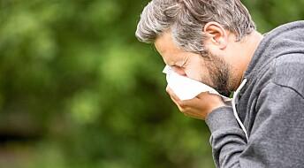 Den kalde vinteren kan gi kraftig pollenspredning