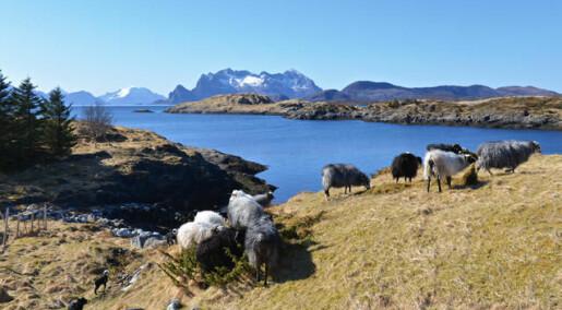 Hvorfor styrer ikke kvinner norsk utmark?