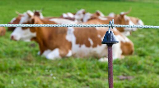Slik blir dyr påvirket av strømgjerder og elektriske halsbånd