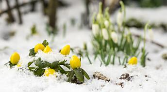 Spør en forsker: Hvordan overlever spirende planter den kalde snøen?