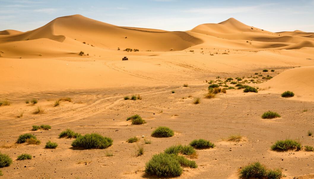 Studien viser at de naturlige klimavariasjonene står for to tredjedeler av Saharas vekst, mens menneskeskapte klimaendringer er ansvarlig for resten. (Foto: Shutterstock / NTB scanpix)