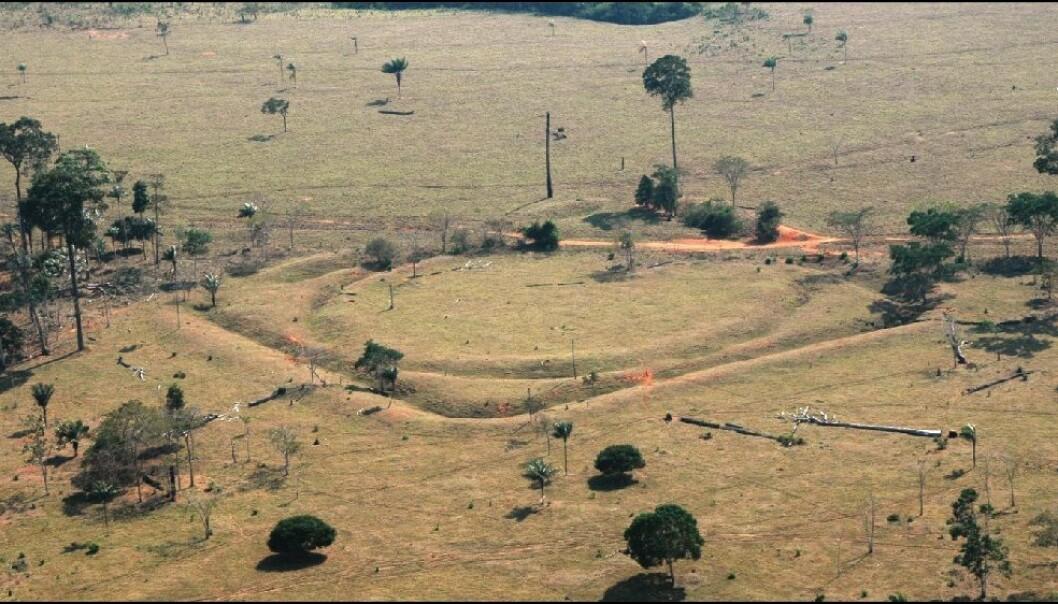 En av geoglyfene som finnes sør i Amazonas.  (Bilde:  University of Exeter)